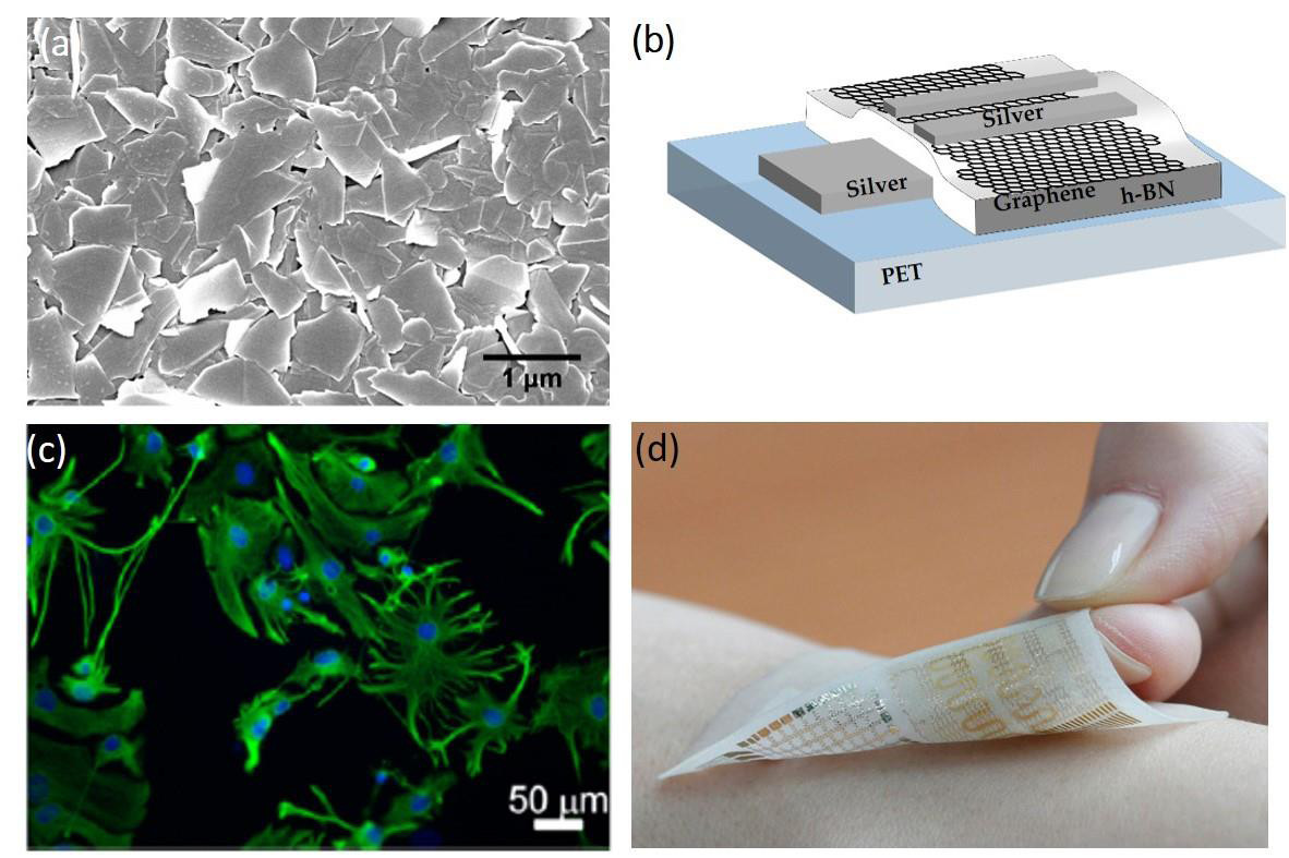 a) Nanostructured GRM films, b) GRM-based hybrid heterojunction, c) graphene films preserve the basal physiological level of neuronal activity, d) a textile-based flexible bio-sensor.